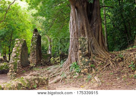 Kenya Gede ruins are the remains of a Swahili town located in Gedi a village near the coastal town of Malindi