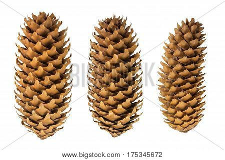 set of beautiful spruce cones, dried cones spruce close up isolated on white background