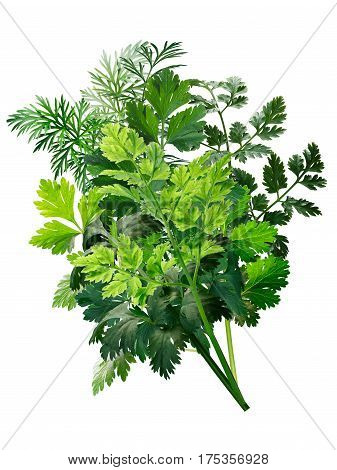 Herbs Bouquet Combination, Paths