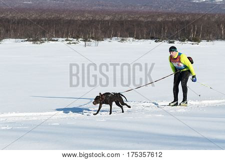 Skijoring - Competition For Cup Of Kamchatka Peninsula