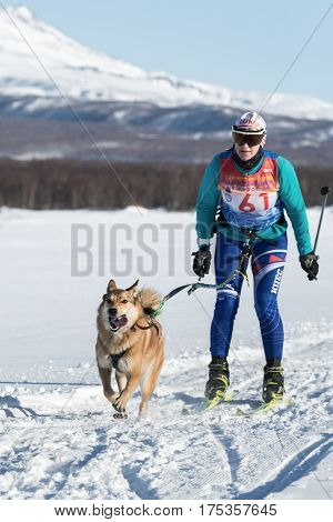 Skijoring - Competition For Cup Of Kamchatka Region