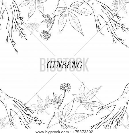 Root and leaves panax ginseng sketch style. Hand draw vintage illustration of medicinal plants background. For traditional medicine gardening. Biological additives are.