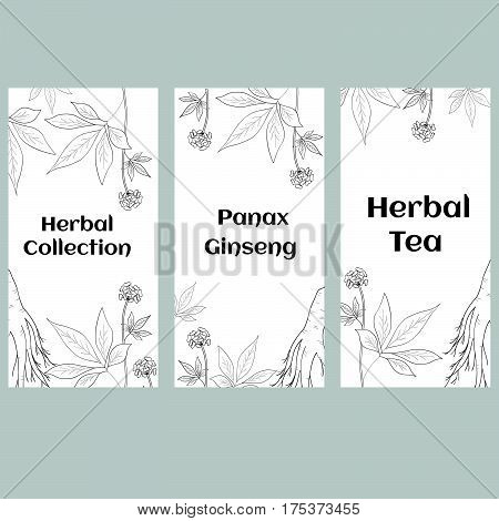 Set of three vertical banners labels with herbs and ginseng root on white background sketch style. Hand draw vintage illustration of medicinal plants. For traditional medicine gardening.