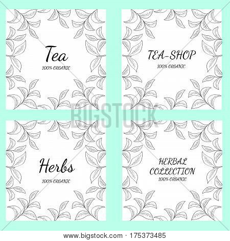 Green tea leaf illustration branch organic hand drawing sketch 4 square banner template for packing cosmetics packaging branding etc