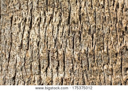 Old wood tree bark texture background pattern.