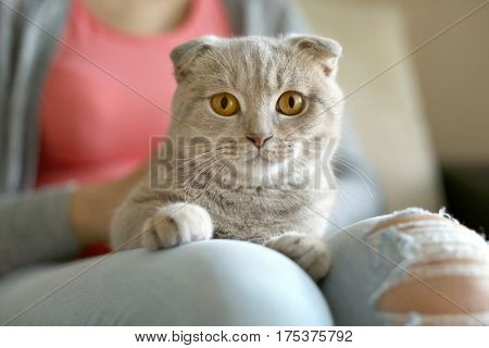 Young woman holding cat on knees