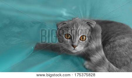 Cute cat sitting in plastic bag