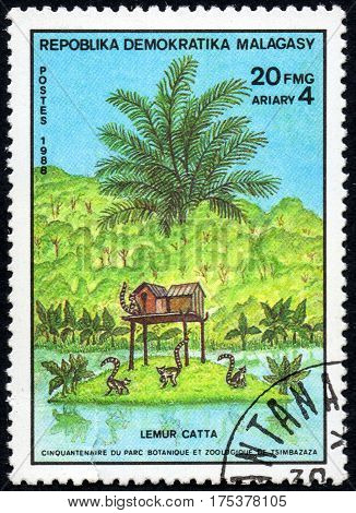 UKRAINE - CIRCA 2017: A stamp printed in Malagasy Madagascar shows Ring-tailed Lemur Catta serie Fiftieth anniversary of the botanical and zoological park of Tsimbazaza circa 1988
