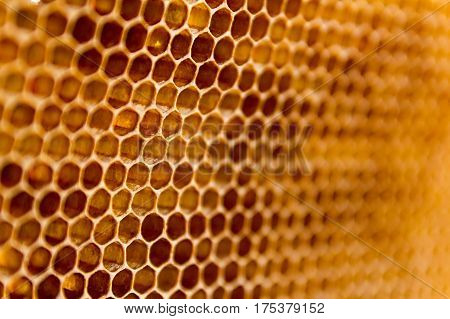 Closeup raw organic Honeycombs . Newly pulled honey bee honeycomb beeswax .