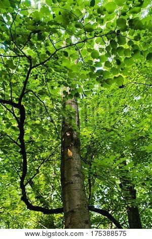 Tree trunks in a very dense forest at summer, Kosutnjak, Belgrade, Serbia