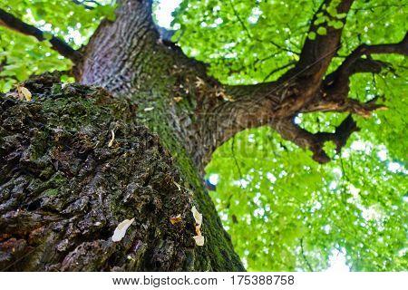 Under big old oak tree at summer in Kosutnjak forest, Belgrade, Serbia