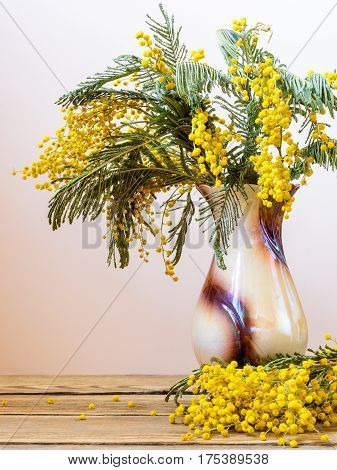 Still life with yellow spring flowers. Acacia dealbata known as silver wattle blue wattle and mimosa. Bouquet in vase on wooden table on smooth bright background.
