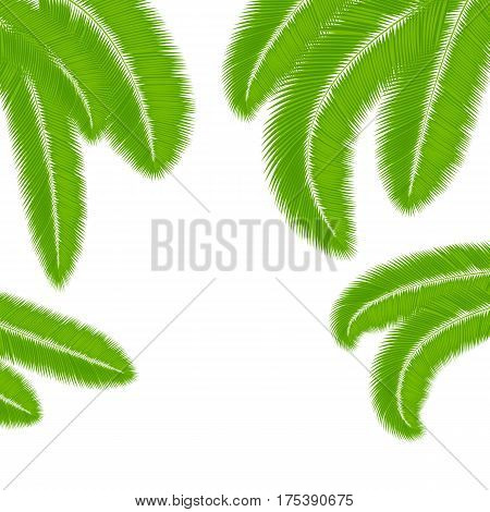 Green palm leaves silhouettes isolated on white background. Tropical summer fronds. Vector design elements.