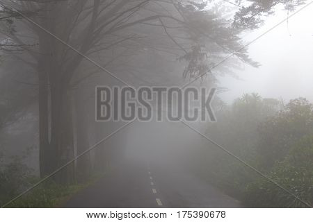 Road in a fog in a cloud in the mountains of Madeira Island Portugal.