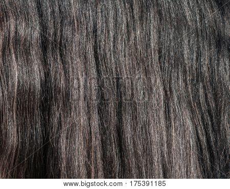 Closeup of gray horse long glitter mane. Nature background.
