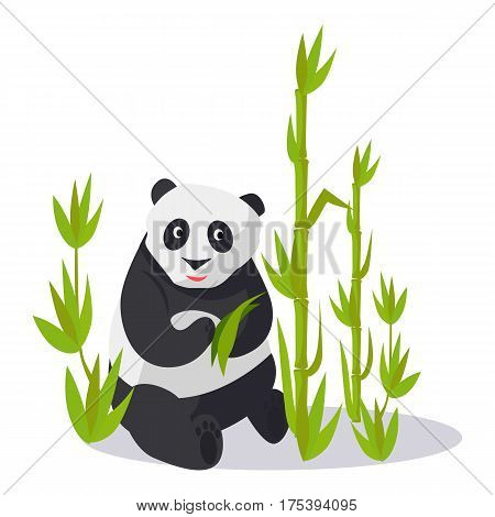 Panda sitting between young bamboo sticks holds green leaves. Vector illustration of isolated oriental white-black animal on white. Asian bear on glade with many greenish high bamboo plants.