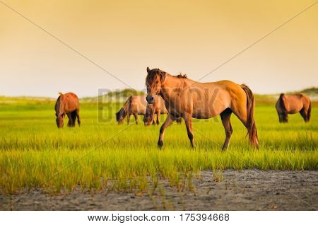 A wild stallion among other horses in the grass