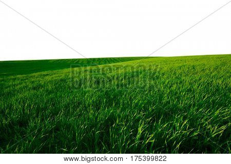 Summer landscape with green grass; Isolated On White Background
