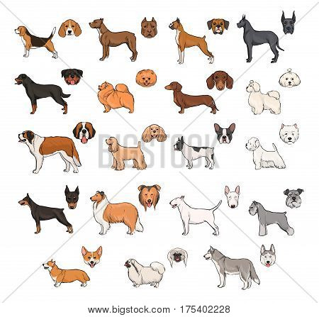 Collection with hand drawn colorful realistic illustration. Dog breeds, side view and muzzle set.