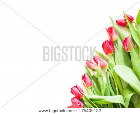 present card with pink tulip flowers corner template
