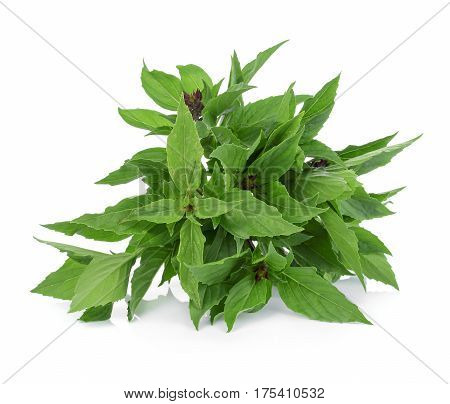 Sweet Basil on white background food green healthy