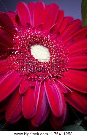 Fowers with highlighted red daisy