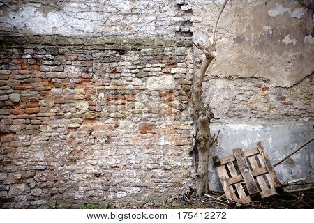 Wooden pallets and a dead tree on a rustic wall of staggered and broken bricks.