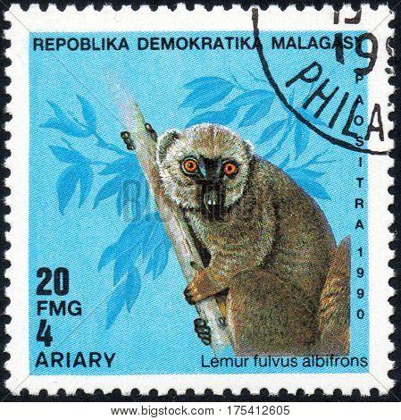 UKRAINE - CIRCA 2017: A stamp printed in Malagasy Madagascar shows Lemur fulvus albifrons circa 1990