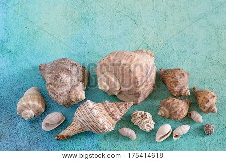 Beach vacation. Various sea shells on a blue-green background.