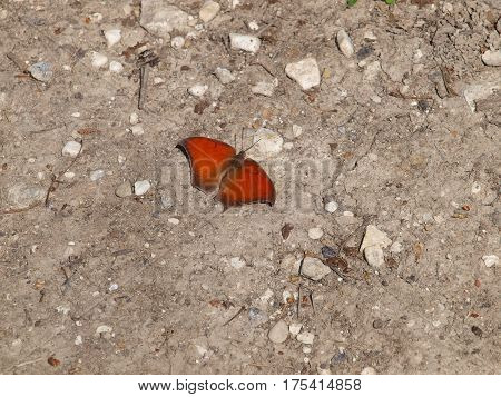 Orange winged  garden variety Texas butterfly on a background of sand and gravel.