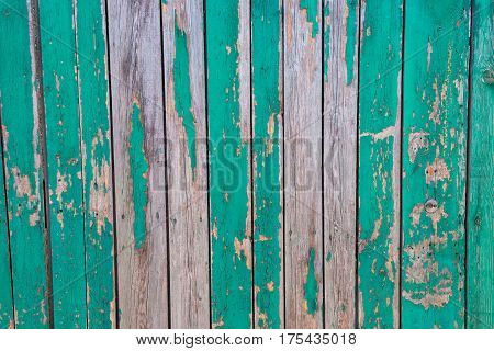 old abandoned fence of boards in green paint which has peeled off the background