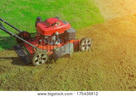 Lawn mower cutting green grass in backyard,Garden service,grass cutter cutting green lawns.