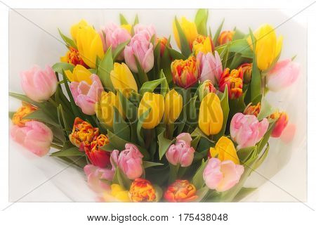 Flowers tulips. Colored bouquets of tulips. Cocept of Women's Day, Mother's Day, Valentine's day, 8 march, Greeting card for all occasions, especially spring. For romantic background , backdrop, substrate, composition use.