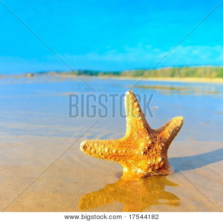 Sea Fish Shell