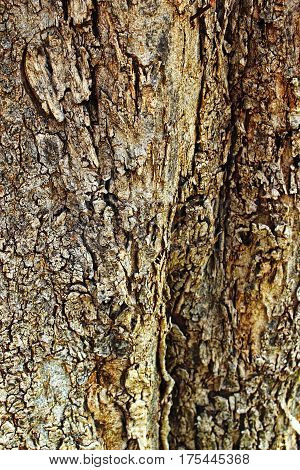 abstract background bark branches brown cellulose close up