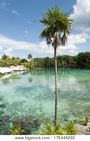 The palm tree next to the transparent water lagoon on Cozumel island (Mexico).
