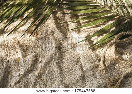 Palm leaves on on a coarse linen cloth sackcloth. natural lighting from a window background