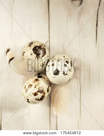 Easter composition quail eggs with feathers in shades of brown