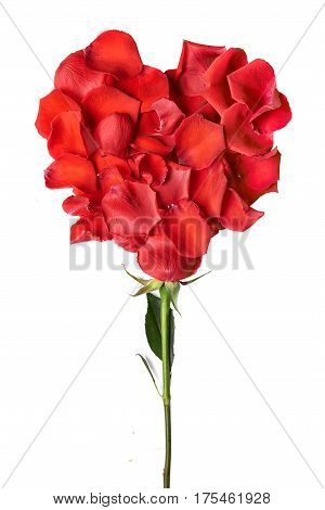 heart shape by red rose petals with stick isolated on white background. Snt. Valentines day concept