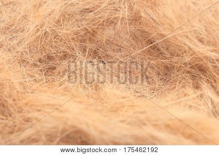 Macro of dog hair. Dogs hair after molting. Dog wool background.