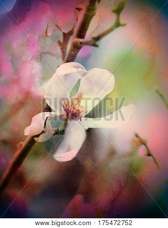 Photo of a wonderful gentle blooming magnolia in spring