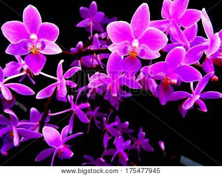 impressive scene of tiny purple orchid flowers in contrast with background