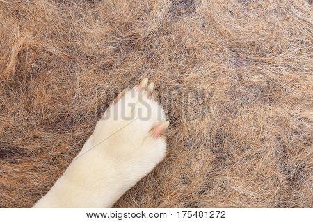 Dog Hair In Flat On The Floor