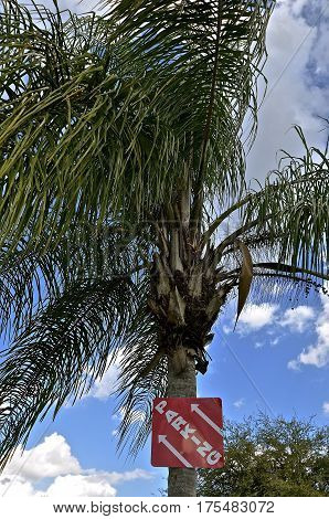 A sign on a palm tree indicates parking to the left or somewhere in space