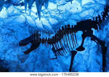 a picture of a tyrannosaurus rex in ice