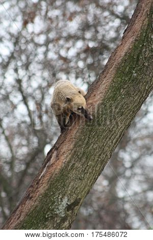a picture of an anteater in tree