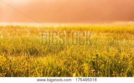 Vibrant Landscape With Foggy Meadow In Poland