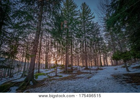 Dense forest in winter, Karkonosze mountains, Poland
