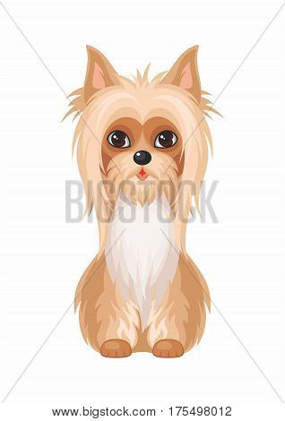 Australian Silky Terrier. Vector image of a cute purebred dogs in cartoon style.