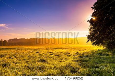 Mysterious And Hazy Meadow Landscape Photographed In Poland